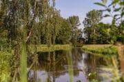 Een rivier met aan weerszijden bomen